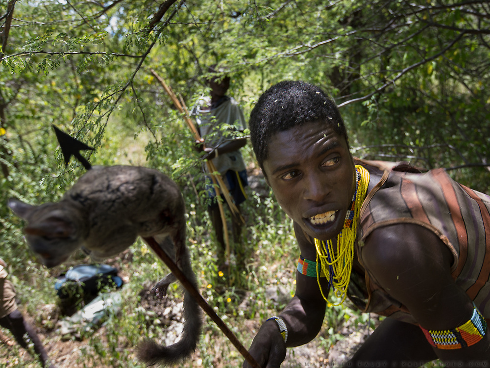 Hunting bush baby with bow and arrow. At the Hadza camp of Dedauko.