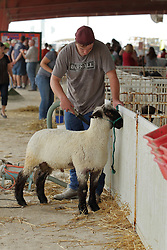 03 August 2017:  A presenter vacuums his Sheep for showing at 2017 McLean County Fair<br /> <br /> #alphoto513