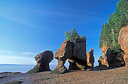 Rocks at Cape Hopewell at low tide in Bay of Fundy<br /> The Rocks Provincial Park<br /> New Brunswick<br /> Canada