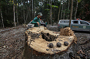 Boa Vista do Pacarana, Rondônia, Brazil: 07-20-2019: Ibama agents investigate illegal logging near Boa Vista do Pacarana. With few remaining areas of legal timber management in the region, according to Ibama, about 80% of sawmills use illegal timber from indigenous reserves.