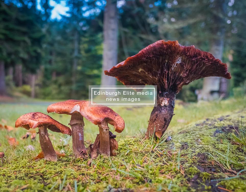 Autumnal fungi near Loch Fiskally.<br /> Neil Bain | EEm 4th November 2017