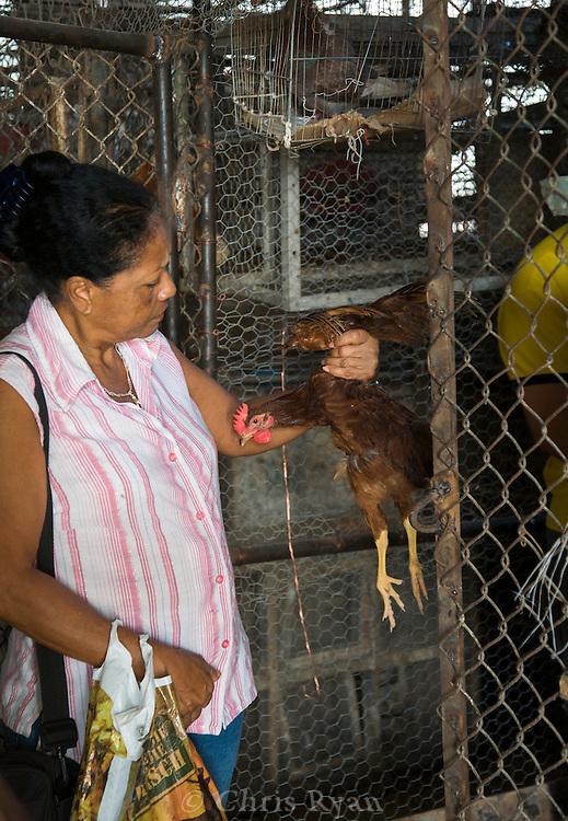 Woman inspecting chickens for sale, Mercado Agropecuario Cuatros Caminos, Havana, Cuba