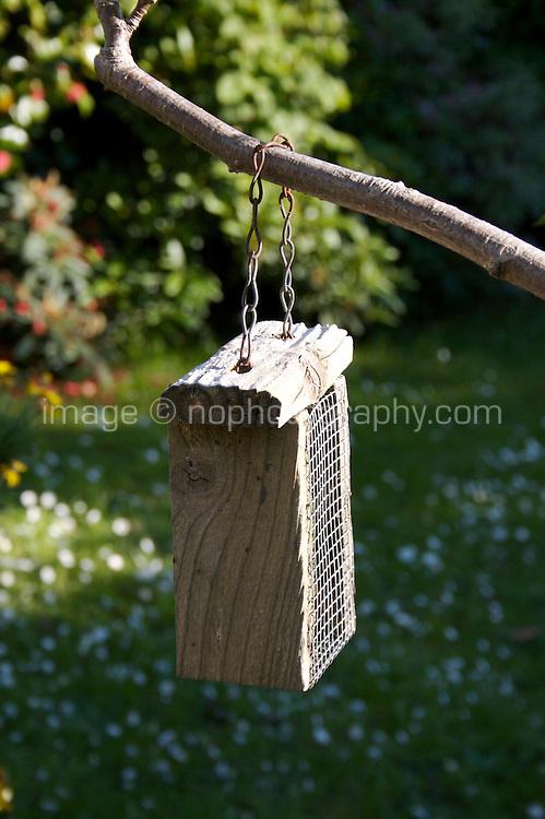 Empty bird feeder hanging from Rowan tree in garden