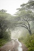 Landscape with view of acacia trees and a dirt road in a rain, Lake Manyara National Park, Tanzania