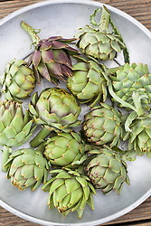 Harvested artichokes on a silver tray. <br /> Cynara cardunculus Scolymus Group