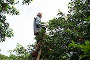 Moloa'a Organica'a Farm is located in Kapa'a on Kauai Island in Hawaii