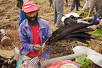 Chimbu province man removes bird of paradise feathers from storage for use in headdresses.  Mount Hagen, Western Highlands Province, Papua New Guinea.