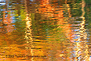 In late afternoon two tree trunks on the other bank of Herring Run, shone white in the sun.  In between the two trees, there were  reflections  of red leaves.  This impressionist reflection photo captures the streaks of these off-white, red, dark green and light green colors. Impressionist reflection photo by Tomoko Yamamoto
