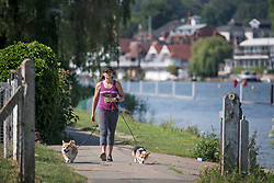 © Licensed to London News Pictures. 15/06/2021. Henley-on-Thames, UK. A woman walks her dogs along the bank of the River Thames at Henley-on-Thames in Oxfordshire on a hot summer's morning. Photo credit: Ben Cawthra/LNP