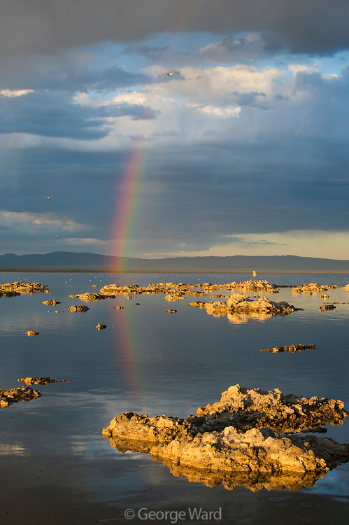 Rainbow, Reflection and Passing Storm, Mono Basin National Forest Scenic Area, California