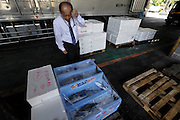 Tokyo, Tsukiji wholesale fish market  at end of day inspection of fresh fish ready for transport