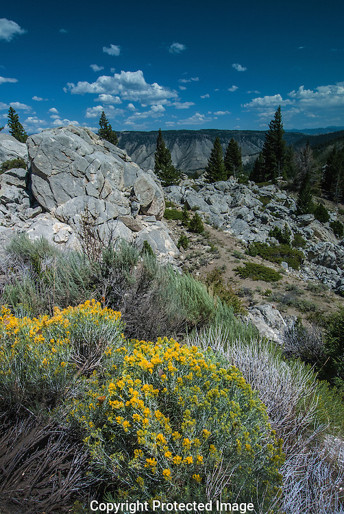 Butterflies and sage in bloom along Tower-Roosevelt to Mammoth Road, Yellowstone.