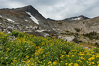 I was surprised that these flowers were still blooming at 9,000 feet in the Crazy Mountains in late September.