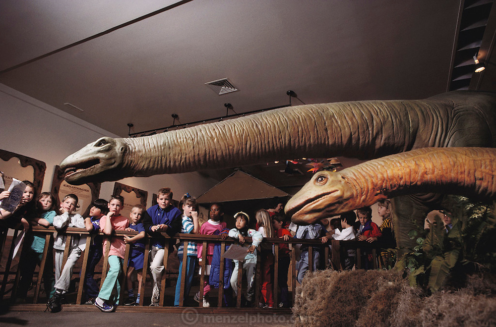 At the Science Museum in Dallas, Texas, school children watch the animated robot dinosaurs Apatosauruses (half size, made by Dinamation International) swing their heads close to them. Dinamation International, a California-based company, makes a collection of robotic dinosaurs. The dinosaurs are sent out in traveling displays to museums around the world. The dinosaur's robotic metal skeleton is covered by rigid fiberglass plates, over which is laid a flexible skin of urethane foam. The plates and skin are sculpted and painted to make the dinosaurs appear as realistic as possible. The creature's joints are operated by compressed air and the movements controlled by computer.