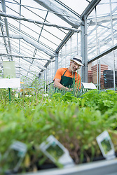 Male gardener working in greenhouse, Augsburg, Bavaria, Germany