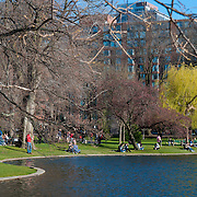 People picknicking near the lagoon in the Public Garden of Boston