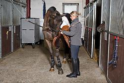 LRV lessen reeks africhting jonge springpaarden<br /> Stal Spiessens - Wintam 2014<br /> © Dirk Caremans