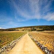 Rows of young vines in an old French vineyard with dirt road