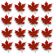 Digitally enhanced repetitive image of a silhouette of a maple leaf
