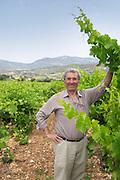 Auguste Commeyras Domaine l'Aigueliere. Montpeyroux. Languedoc. Syrah grape vine variety. Owner winemaker. France. Europe. Vineyard.