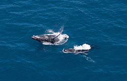 Two whales surface off Broome's Cable Beach
