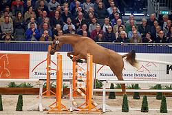 038, Kowboy<br /> KWPN Stallionshow - 's Hertogenbosch 2018<br /> © Hippo Foto - Dirk Caremans<br /> 31/01/2018