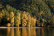 Autumn foliage colours in the trees at the Green Point Day Use area in Sasquatch Provincial Park on Harrison Lake.