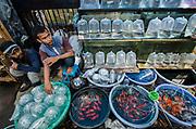 Aquarium Fish in market<br /> Jatinegara Animal market<br /> Jakarta<br /> Indonesia