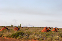 termite mound with worker's helmets in the outskirts of Great Sandy Desert, Western Australia