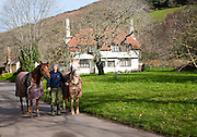 Woman walking two horses in Bossington village, Exmoor national park in winter, Selworthy parish, Somerset, England