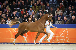 474 - Gentleman<br /> KWPN Stallion Selection - 's Hertogenbosch 2014<br /> © Dirk Caremans