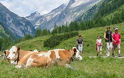 THEMENBILD - Deutsche Wanderin stirbt nach Kuh-Attacke, Landwirt muss mehr als 180.000 Euro bezahlen. Mit massiven finanziellen Folgen hat ein Bauer zu kämpfen, dessen Kuhherde eine deutsche Hundehalterin zu Tode getrampelt hat. Ein Gericht in Österreich sorgte mit seinem Urteil für Aufsehen. Die 45 Jahre alte Hundehalterin aus Rheinland-Pfalz war im Sommer 2014 im Tiroler Stubaital von der Kuhherde, die offenbar die Kälber vor dem Hund schützen wollte, zu Tode getrampelt worden. Die Frau hatte laut Gericht die Hundeleine mit einem Karabiner um die Hüfte fixiert. Bild Aufgenommen am 08.07.2007 // German wanderer dies after cow attack, farmer must pay more than 180,000 euros. With massive financial consequences has a farmer to fight, whose cow herd has trampled a German dog owner to death. A court in Austria caused a stir with his judgment. The 45-year-old dog owner from Rheinland-Pfalz was trampled to death in summer 2014 in the Tyrolean Stubai Valley by the herd of cattle, who apparently wanted to protect the calves from the dog. The woman had loud court the dog leash with a carabiner around the waist fixed. Picture taken on 08.07.2007. EXPA Pictures © 2019, PhotoCredit: EXPA/ Johann Groder