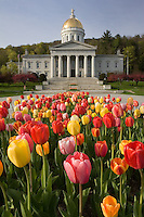 Blooming tulips provide a colorful foreground to the Vermont State Capitol in Spring.