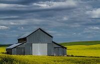A loan barn sits among the bright yellow canola fields in the Southeastern Washington region of the Palouse.