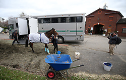 A horse is led out of a horse box during Gold Cup Day of the 2019 Cheltenham Festival at Cheltenham Racecourse.