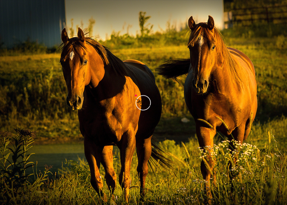 Jasper and Mooney Sorrels, Chestnut Horses