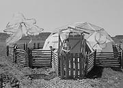 "1006-B076-19 ""Kesey Farm. Geodesic dome. April 1968"""
