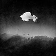 Bright white cloud over dark misty woodlands