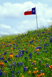 Texas flag flying over a field of native flowers