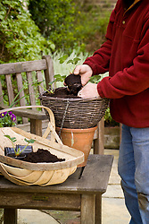 Planting up a hanging basket with strawberries