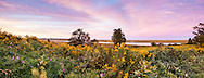 Goldenrod and golden marsh views at Fort Hill in Cape Cod National Seashore.