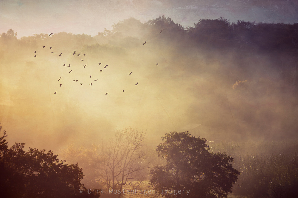 Rising mist and sunrise in a rural landscape