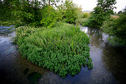 UK ENGLAND WILTSHIRE 26JUN08 - The river Kennet near Stichcoombe in rural Wiltshire, western England...jre/Photo by Jiri Rezac..© Jiri Rezac 2008..Contact: +44 (0) 7050 110 417.Mobile:  +44 (0) 7801 337 683.Office:  +44 (0) 20 8968 9635..Email:   jiri@jirirezac.com.Web:     www.jirirezac.com..© All images Jiri Rezac 2008 - All rights reserved.