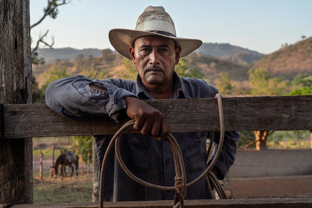 "Filiberto Enmarado, 53, pauses for a moment while rounding up 30 cows for their biannual injection deworming vaccination on the ""La haciendita"" farm March 13, 2019 in Veracruz, Honduras. Photo Ken Cedeno"