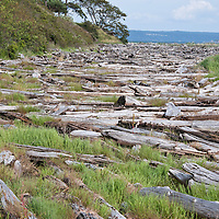 Penn Cove on Whidbey Island, Washington.  Photo by William Byrne Drumm, June 14, 2010.