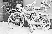 Locked up bicycles covered in snow in Boulder, Colorado.