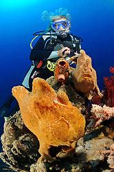 Antennariun commerson,  Zwei Riesen Anglerfische und Taucher, Giant frogfish and scuba diver, Bali, Tulamben, Seraya Secret, Indonesien, Indopazifik, Bali, Indonesia Asien, Indo-Pacific Ocean, Asia