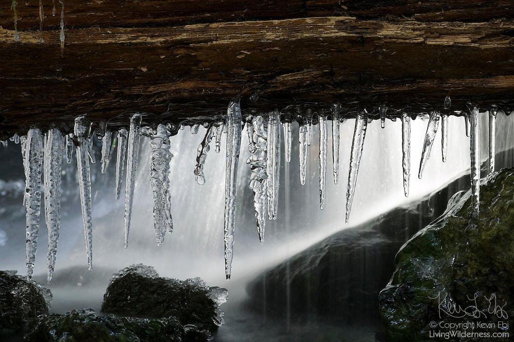 Icicles hang from a downed tree over a creek in the Skookum Flats near Chinook Pass, Washington.