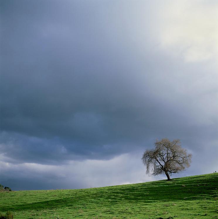 Green Hills, Stanford, California.
