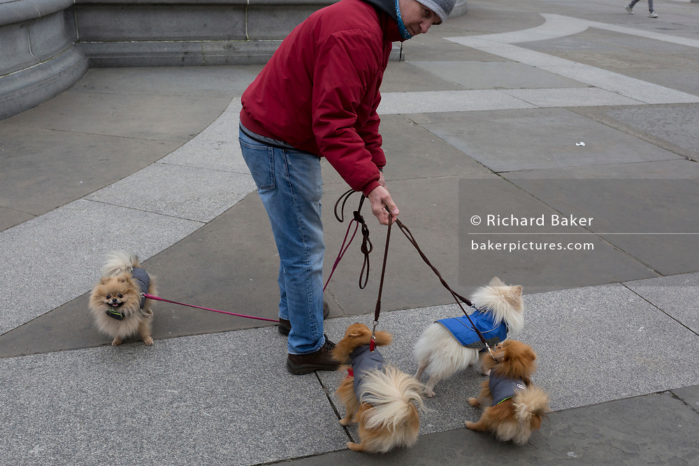 A dogs owner tries to untangle the leads twisted around his four pets in Trafalgar Square, on 10th January 2019, in London, England.